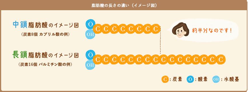 中鎖脂肪酸の長さの違い