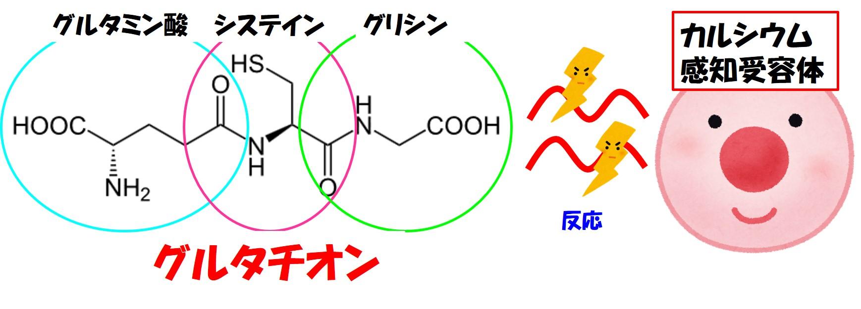 グルタチオンとカルシウム感知受容体