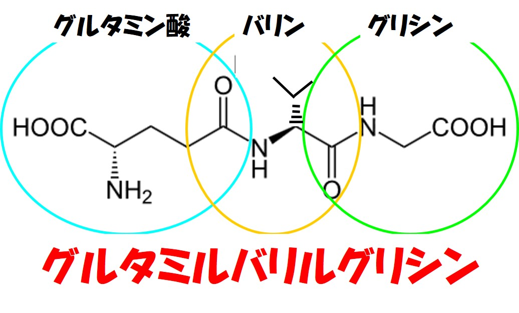 グルタミルバリルグリシン構造式