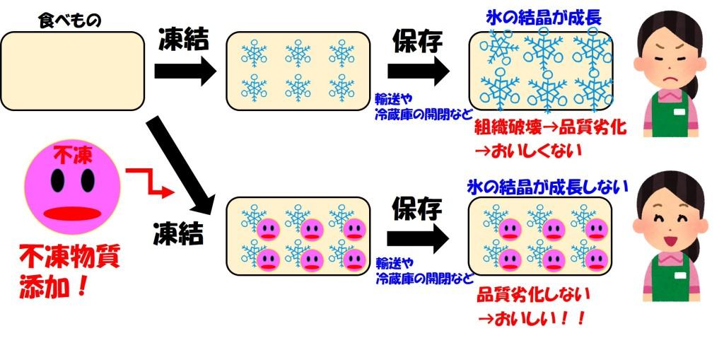 不凍物質の機能