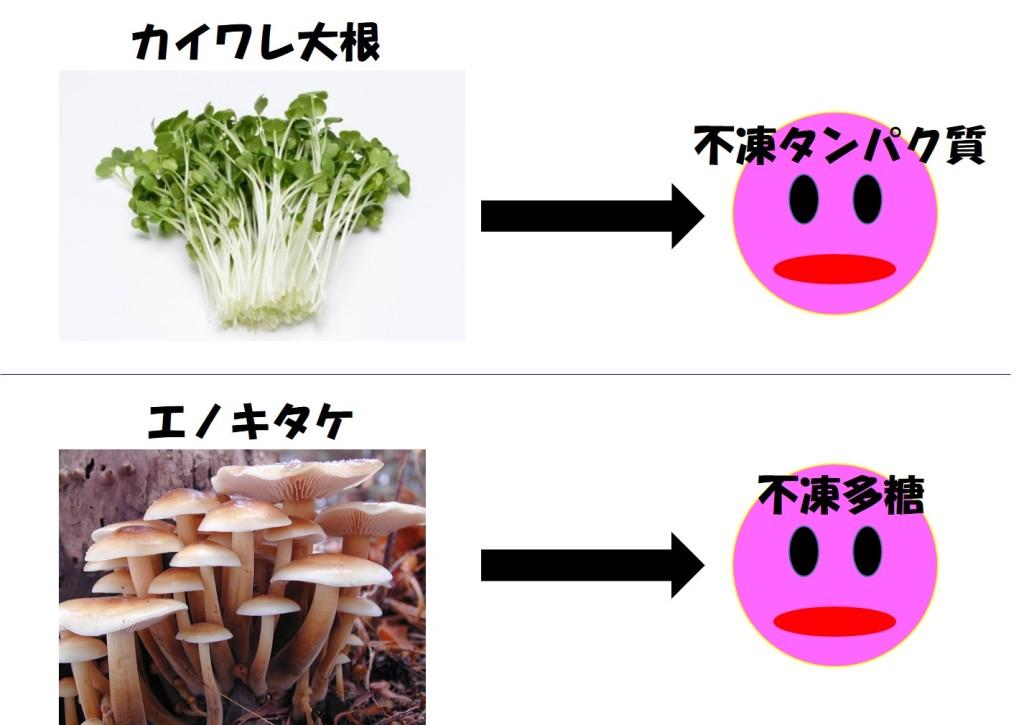 不凍タンパク質と不凍多糖