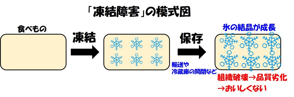 凍結障害の模式図