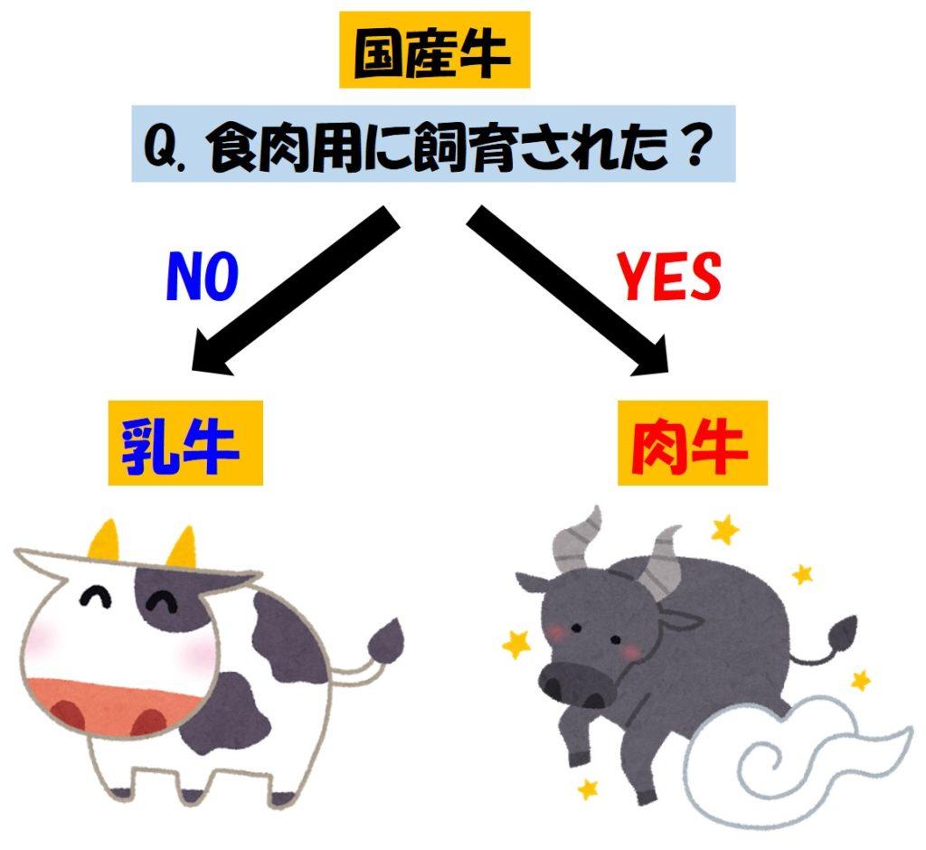 乳牛と肉牛の違い